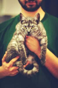 Holding cat