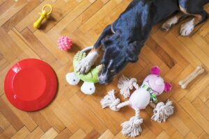 Dog Playing with Toys
