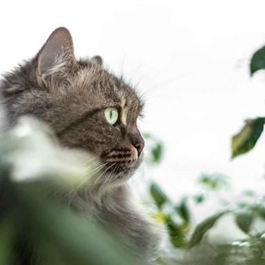 cat sitter in dubai