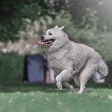 dog walker in dubai