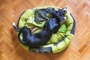 Donut Style Dog Bed