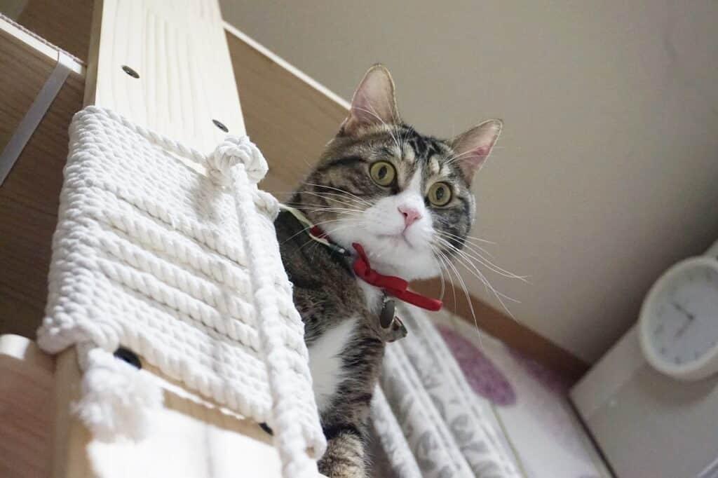 Predator cat on tree