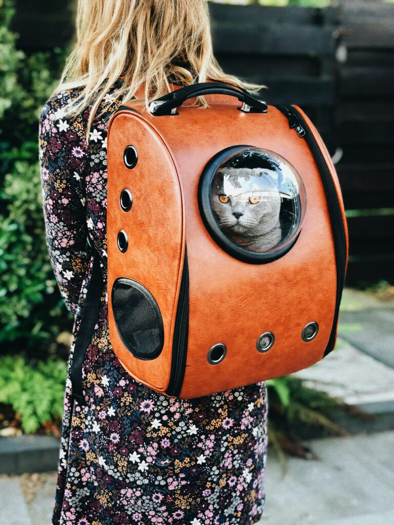 Carrying a cat in backpack