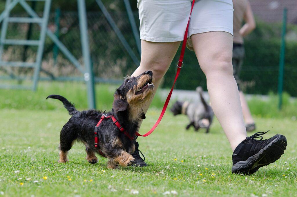Walking a Puppy