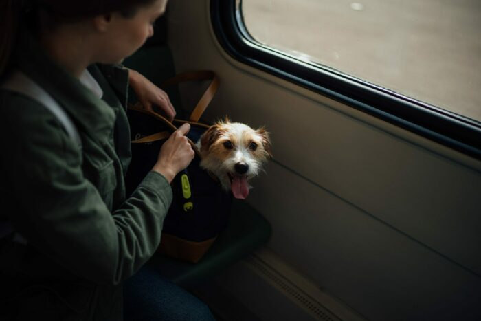 best airline-approved dog carriers