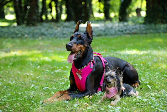 Back dog clip harness