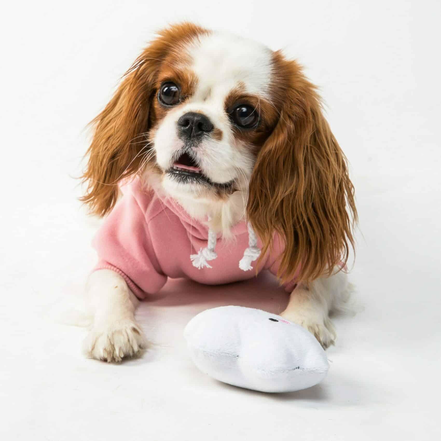 Teething Puppy