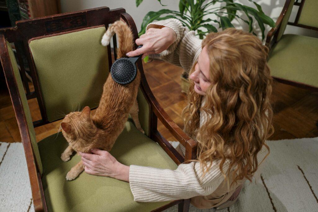 Brushing cat
