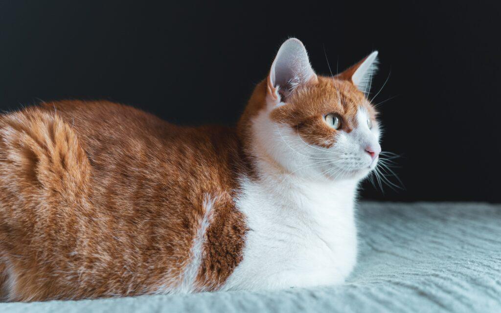 Clean Cat