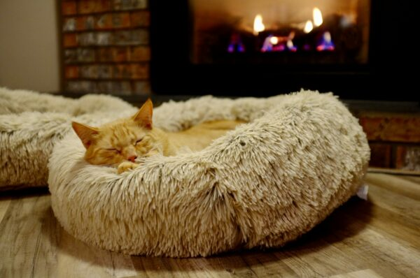 Best cat beds in 2021