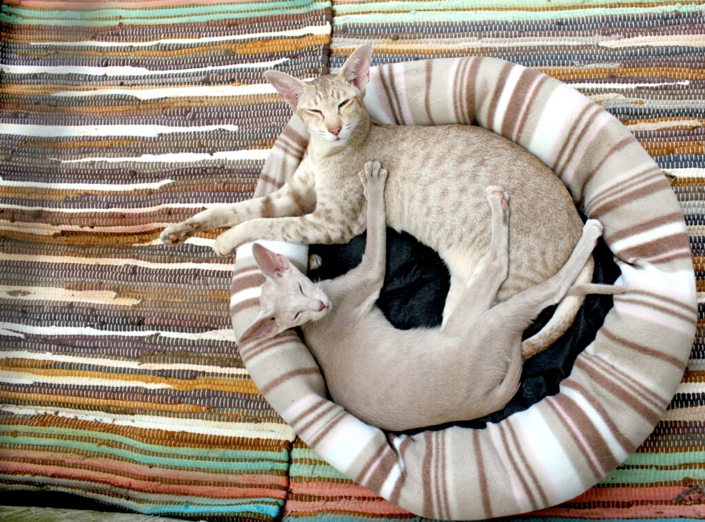 Cat bed size