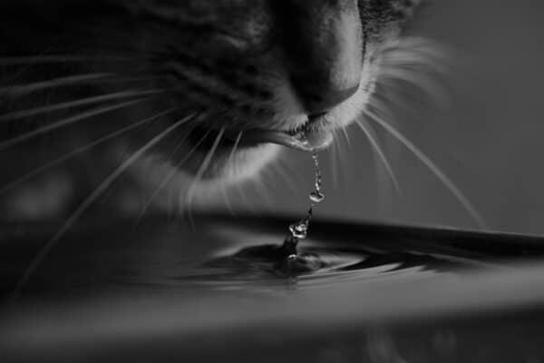 best cat water fountain in 2021