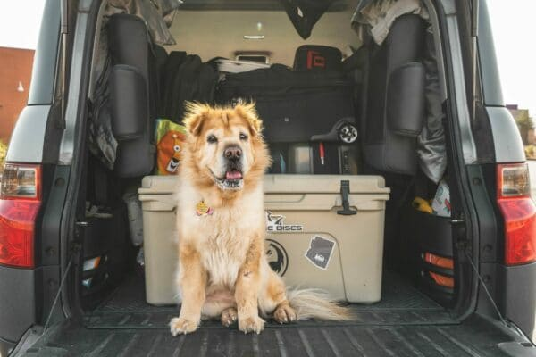 Best dog ramps for vehicles in 2021