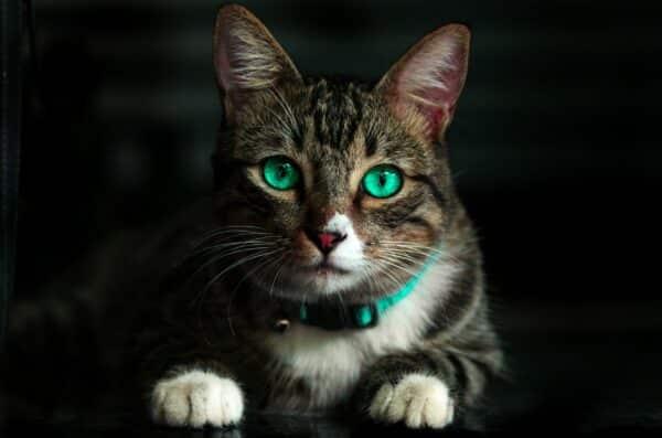 Best flea collars for cats in 2021