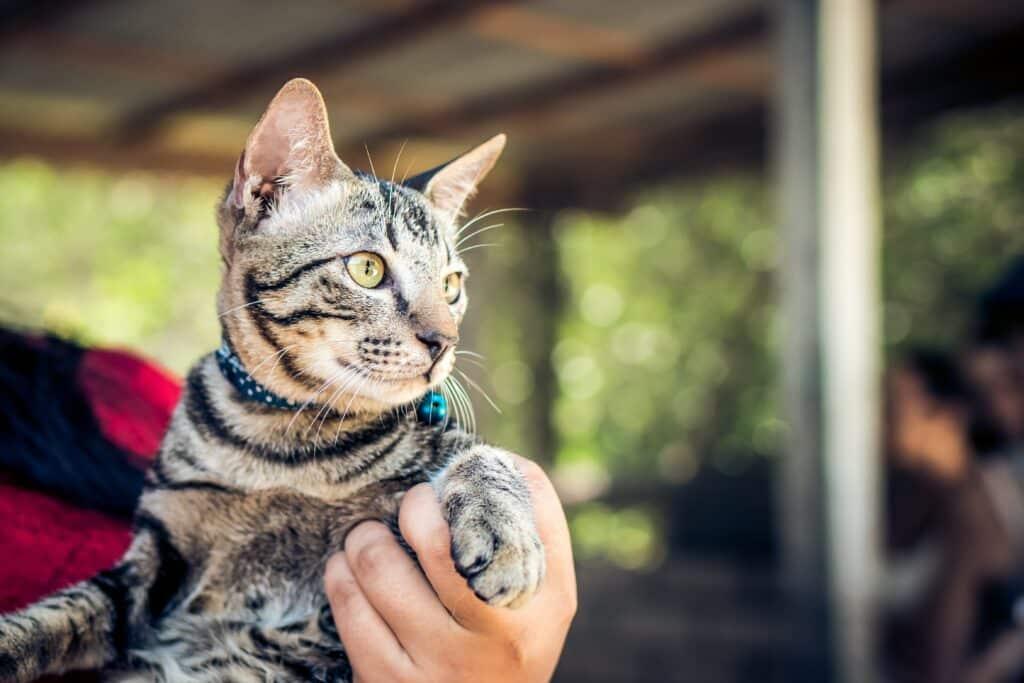 Cat with a flea collar