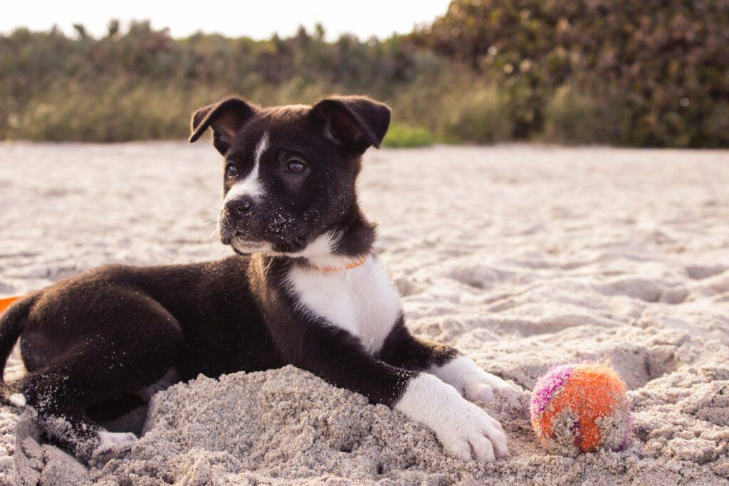 Dog playing on sand