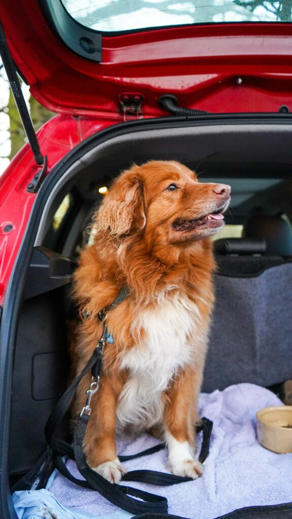 Dog in car's cargo space