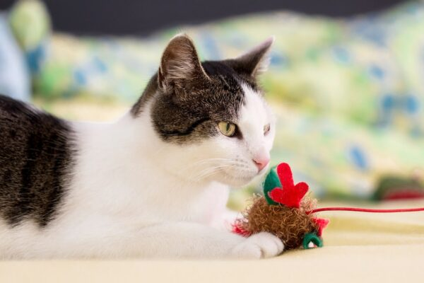 17 best cat interactive toys in 2021