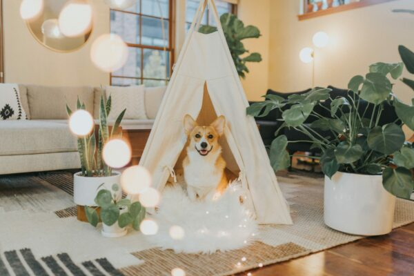 Best dog houses in 2021