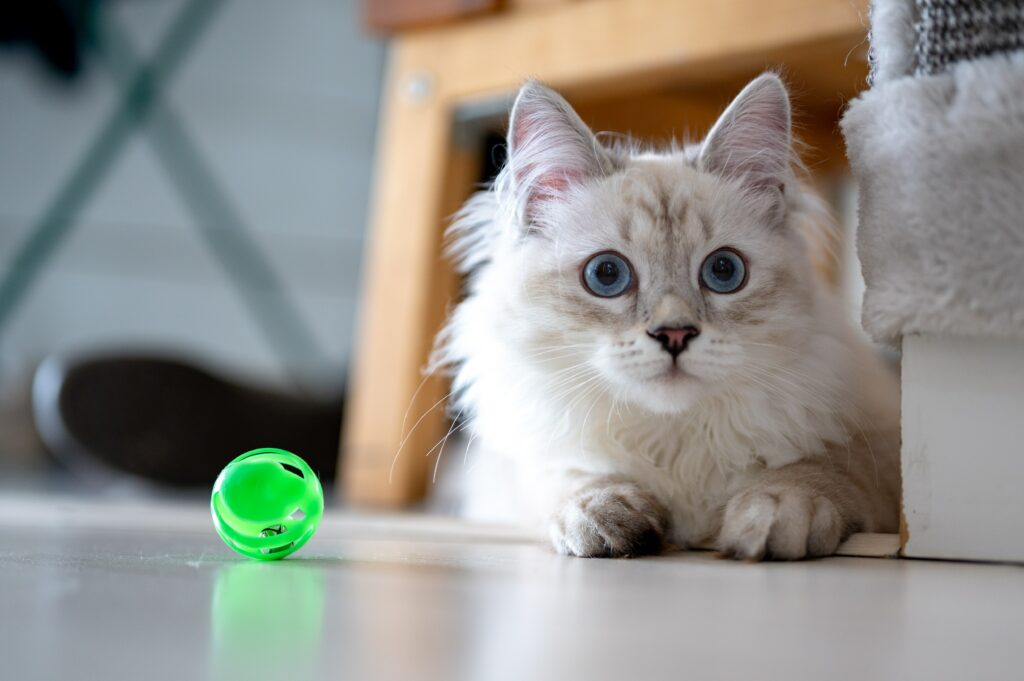 best interactive cat toys in 2021