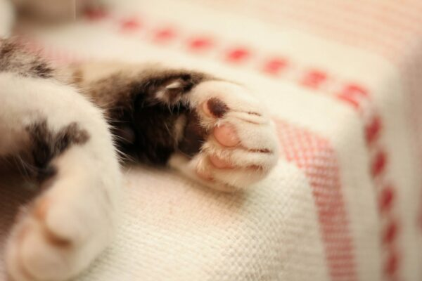 Reasons not to declaw a cat