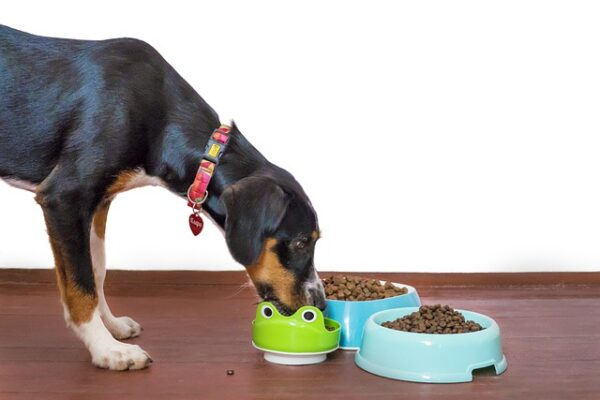 14 best dog treats in 2021